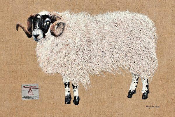 'Wool to Wear'